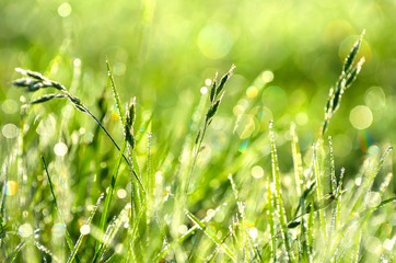 Natural background of grass with drops of morning dew