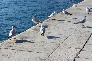Group of seagulls hanging out on the shore.