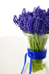 hyacinthus, botryoides, muscari, flowers, spring,