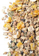 natural grain sportive  muesli background. for horse. macro