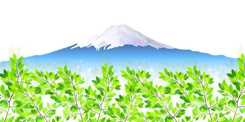 富士山 葉 新緑