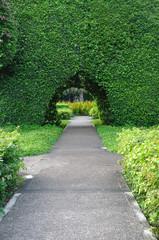 Beautiful bush tunnel in garden