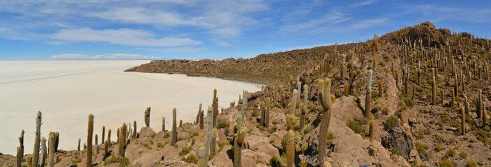 Cactus Island Incahuasi in Uyuni Salt Flats