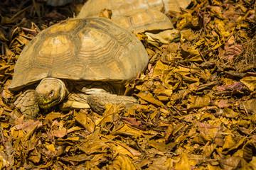 tortoises in bangkok