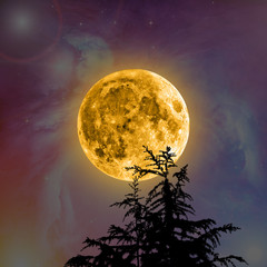 Moon with stars and silhouette of a tree.