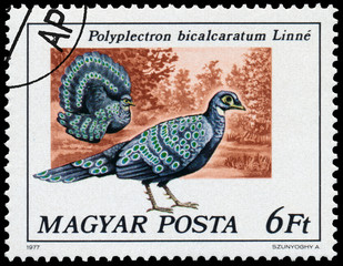 Stamp printed in Hungary shows Grey peacock-pheasant