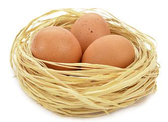 Organic Eggs in Nest
