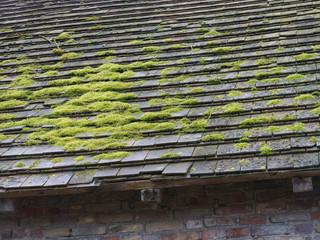 Moos auf dem Hausdach