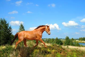Pferde 132