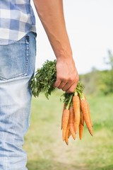 Farmer holding bunch of organic carrots