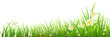 Green grass and flowers on white, vector illustration - 79493969
