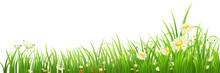 "Постер, картина, фотообои ""Green grass and flowers on white, vector illustration"""