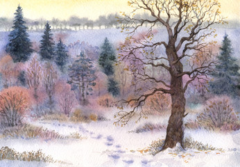 Watercolor landscape. Oak in the woods in winter the valley