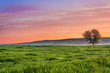 Leinwanddruck Bild - Tra Puglia e Basilicata: paesaggio agreste primaverile.ITALIA