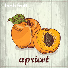 Hand drawing illustration of apricot