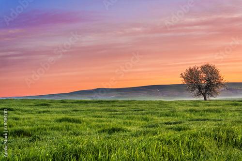 Leinwanddruck Bild Tra Puglia e Basilicata: paesaggio agreste primaverile.ITALIA