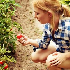 Frau erntet frische Bio-Tomaten