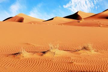 Sahara desert dunes landscape. Morocco