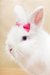 Ready for my closeup - cute bunny portrait