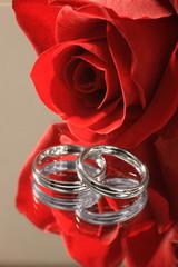 Trauringe mit Rose gespiegelt