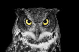 Great Horned owl in BW