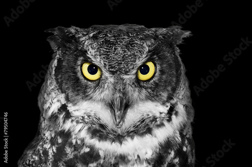 Deurstickers Uil Great Horned owl in BW