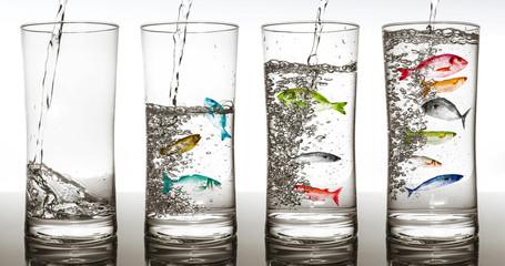 concentrazione ittica