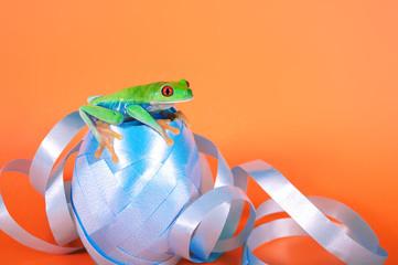 Rotaugenlaubfrosch sitzt auf Geschenkbändern