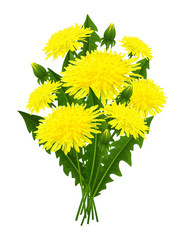 Bouquet of flowers dandelion
