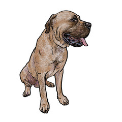 Drawing of mastiff dog on sitting pose
