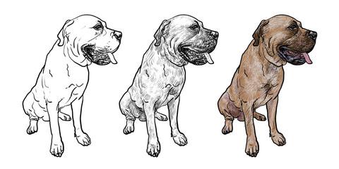 Drawing of mastiff dog on sitting pose