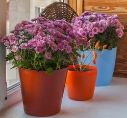 Autumn arrangement from decorative pepper and chrysanthemums