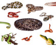 Collection of snakes on white