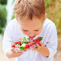 cute boy tasting yummy fresh strawberries in sugar powder