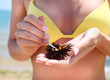 Woman holding a sea urchin for eating it on the beach