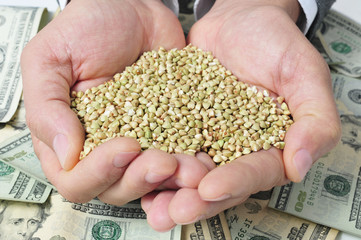 buckwheat seeds and dollar banknotes, depicting the agribusiness