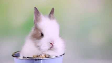 Baby bunny, rabbit