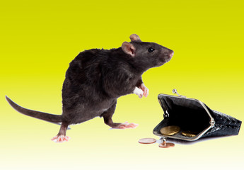 rat with a purse.   mouse  with money