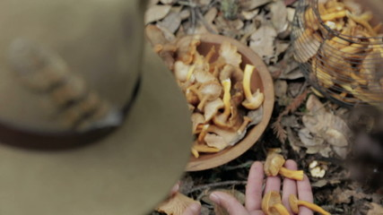 Couple foraging and selecting mushrooms from the ground outdoors
