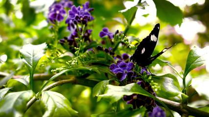 In slow motion a butterfly landing