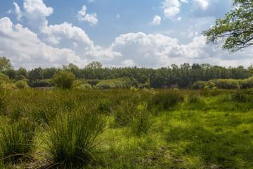 Naturschutzgebiet Witte Venn