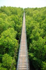 Bridge across mangroves - Stock Image