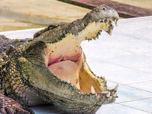 Tuinposter Krokodil Krokodile in thailand