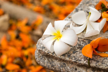 Frangipani flowers on ground of flame of the forest flowers