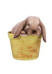 Rabbit in flower pot isolated on a white background