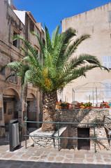 palmier sur une place de Bonifacio