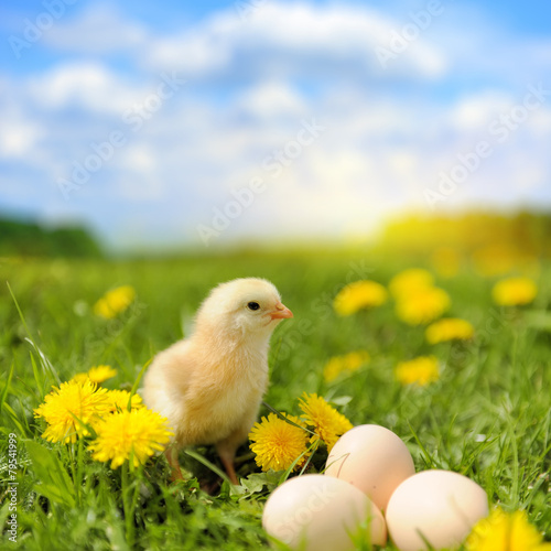 Tuinposter Kip Little chicken