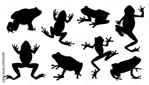 frog silhouettes - 79545398