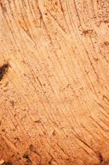 Cut wood surface