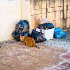 Chat faisant les poubelles à Malte